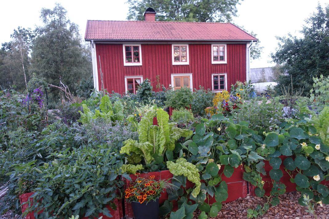 En köksträdgård i morgonljus.