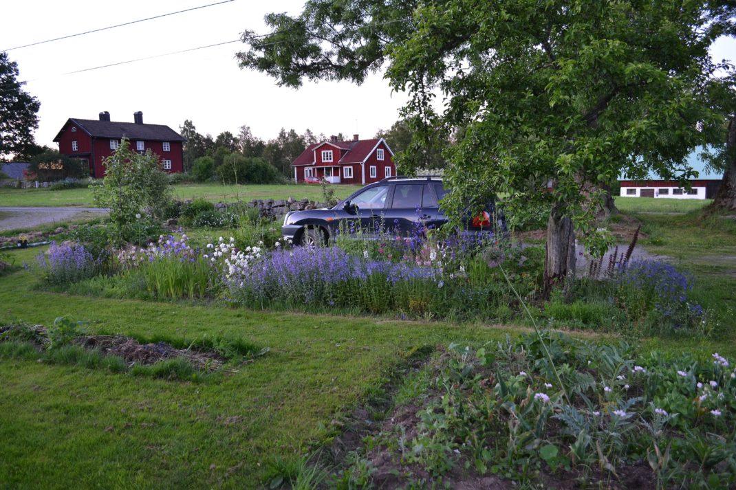 En mer ordnad trädgård med en rabatt med blåa blommor.
