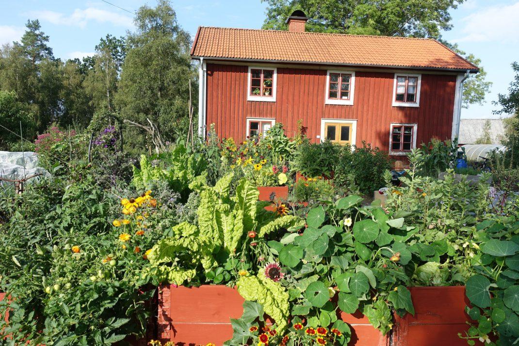 Trädgården i full sol.