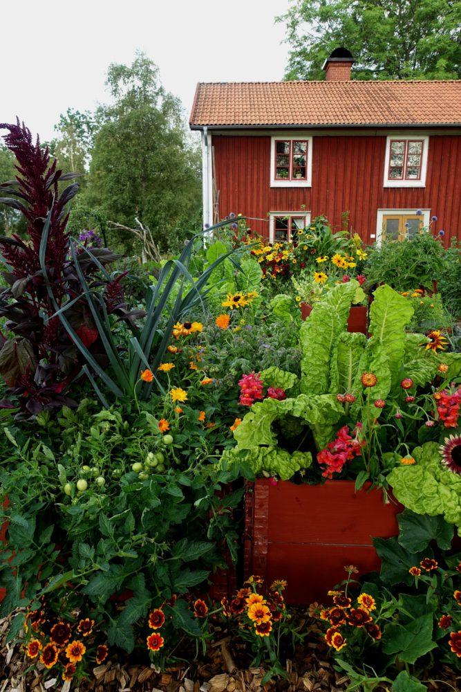 En köksträdgård där grönsaker och blommor varvats.