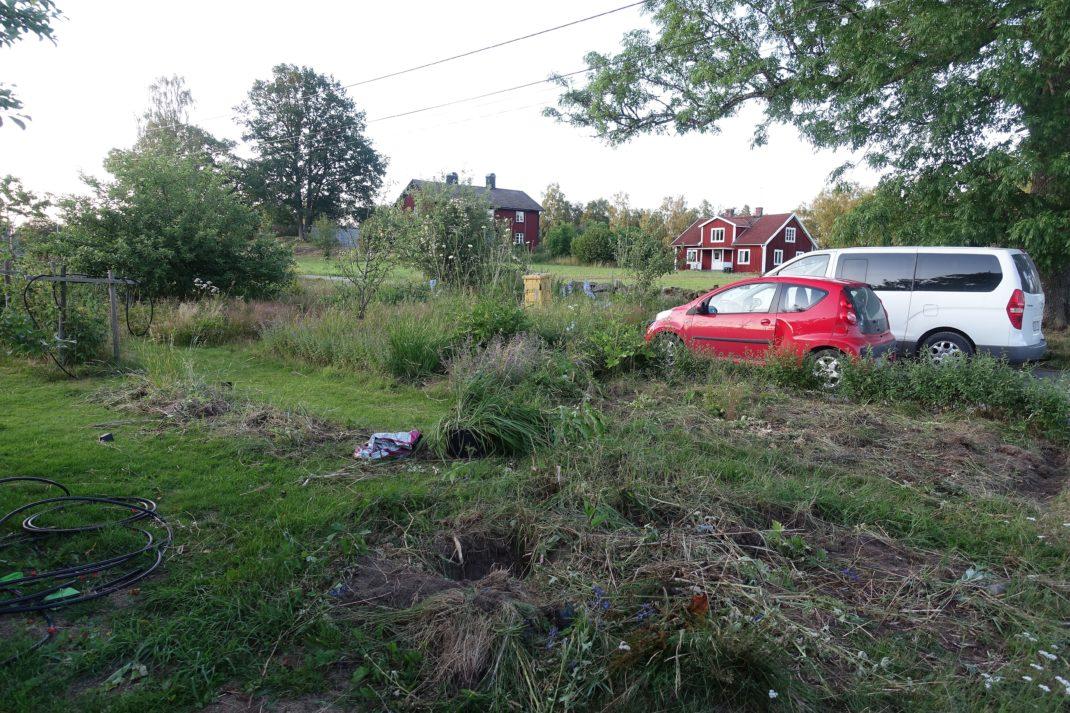En igenvuxen del av en trädgård, med massa ogräs och två bilar som står i bakgrunden.