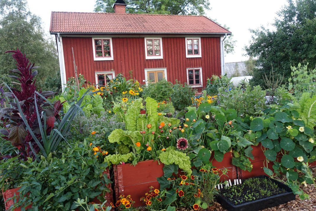 En grönsaksträdgård med gula blommor.