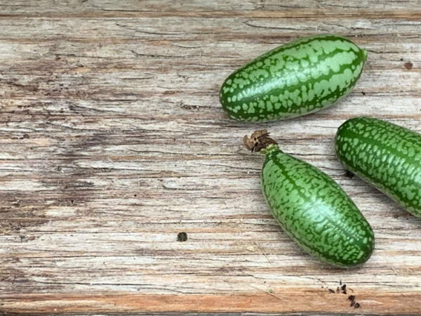 Små gröna djungelgurkor ligger på en grå bräda.