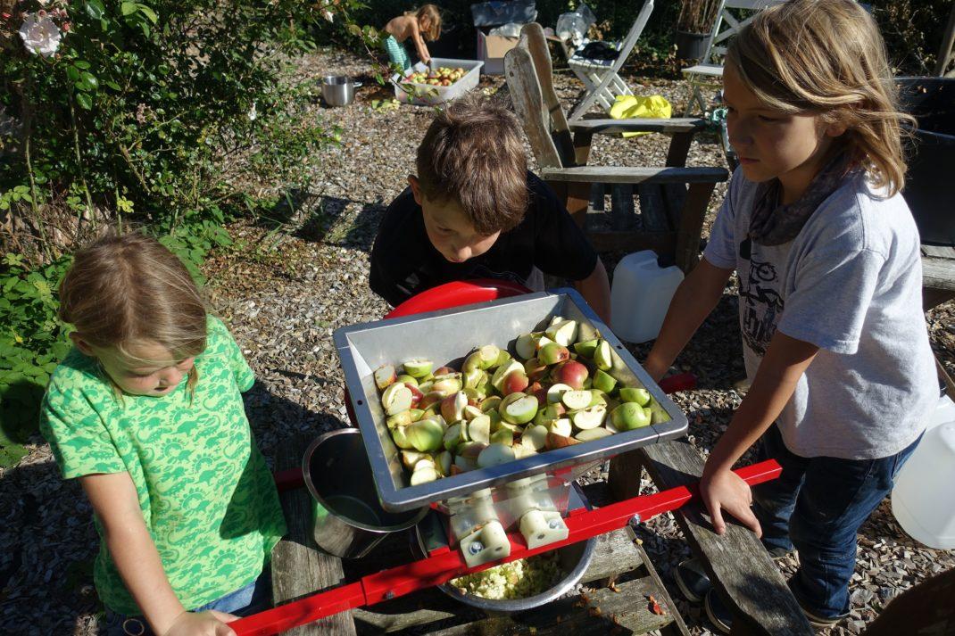 Barn krossar äpplen i en äppelkross.