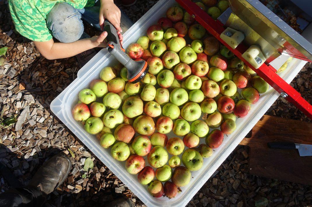 Äpplen ligger i vatten i en stor balja och ett barn sitter bredvid med munstycke till vattenslang.