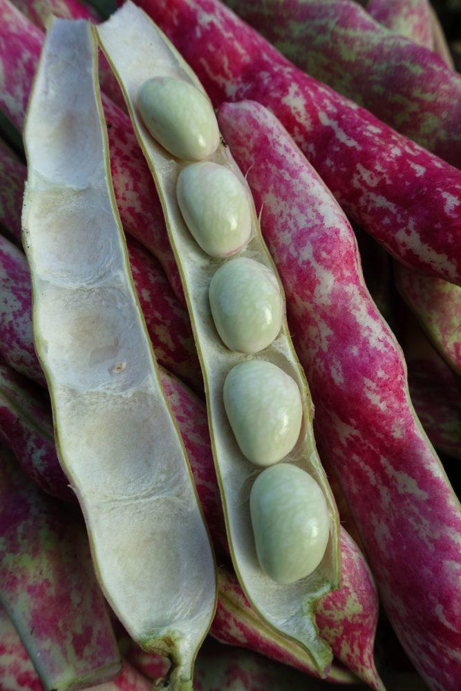 Ett fat me rosa-spräckliga bönor, varav en balja är öppnad och visar fem släta vita bönor inuti.