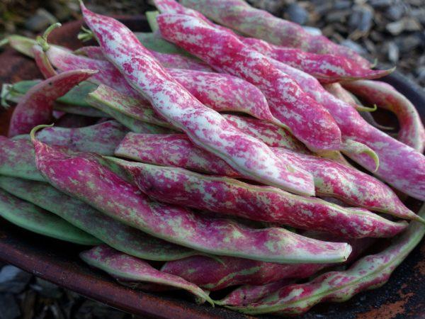 En lerskål med vackert melerade bönor i vitt och rosa.