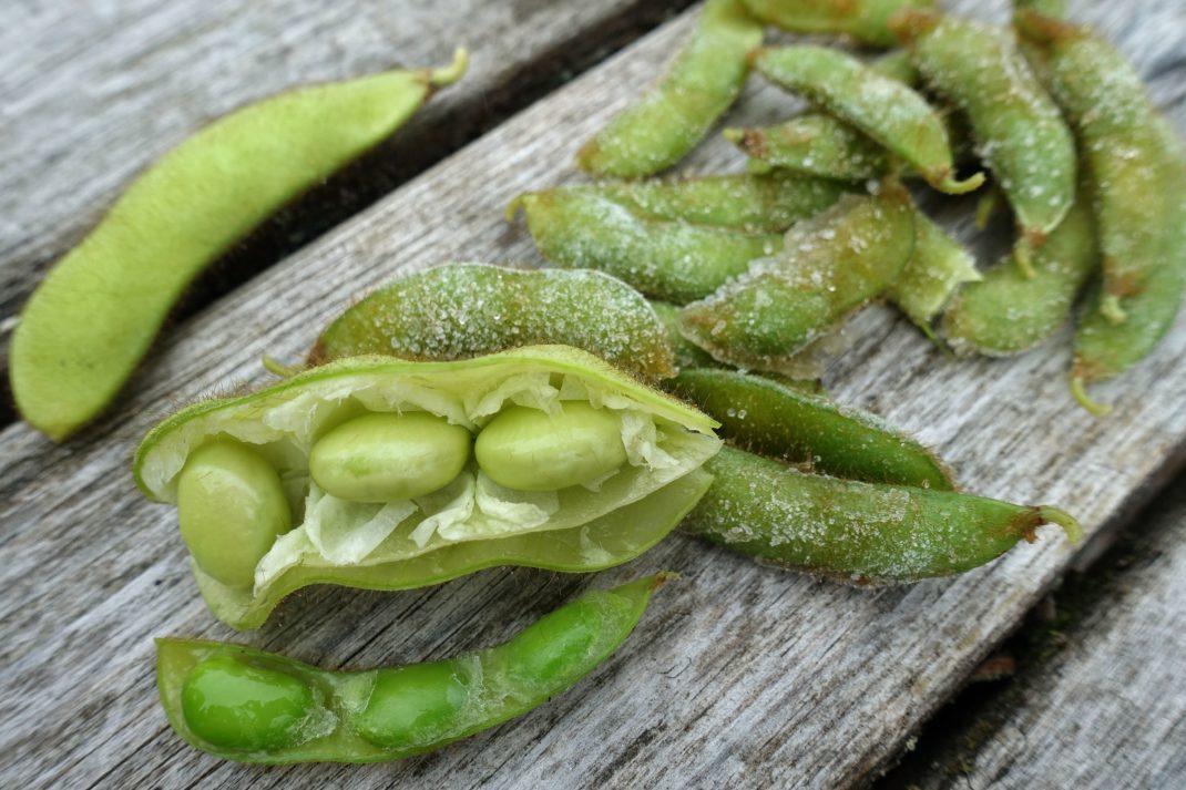 Närbild på öppna gröna sojabönor.
