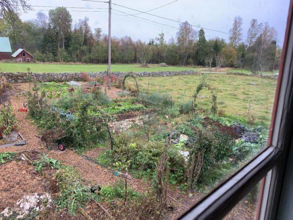 Skillnadens trädgård med odlingar sett från Saras arbetsrum.