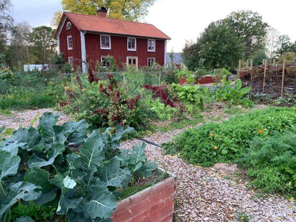 Skillnadens trädgård med vackra odlingar i höstskrud.