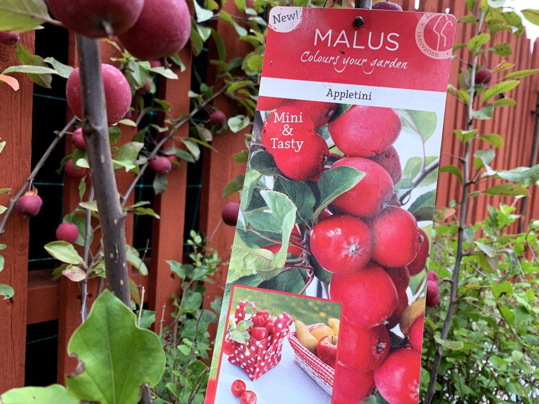 Bild på etikett och äpplen på ett träd med små frukter.