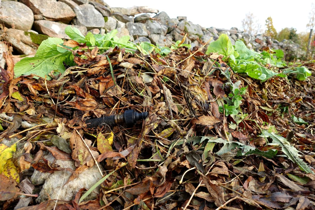 Närbild på löv som ligger över en odlingsbädd vid en stenmur.