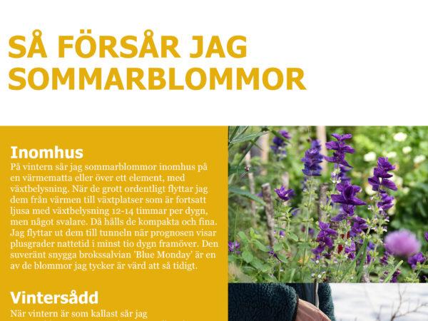 Ett blommande uppslag i guiden Färgstark odling - Så fyller du köksträdgården med sommarblommor