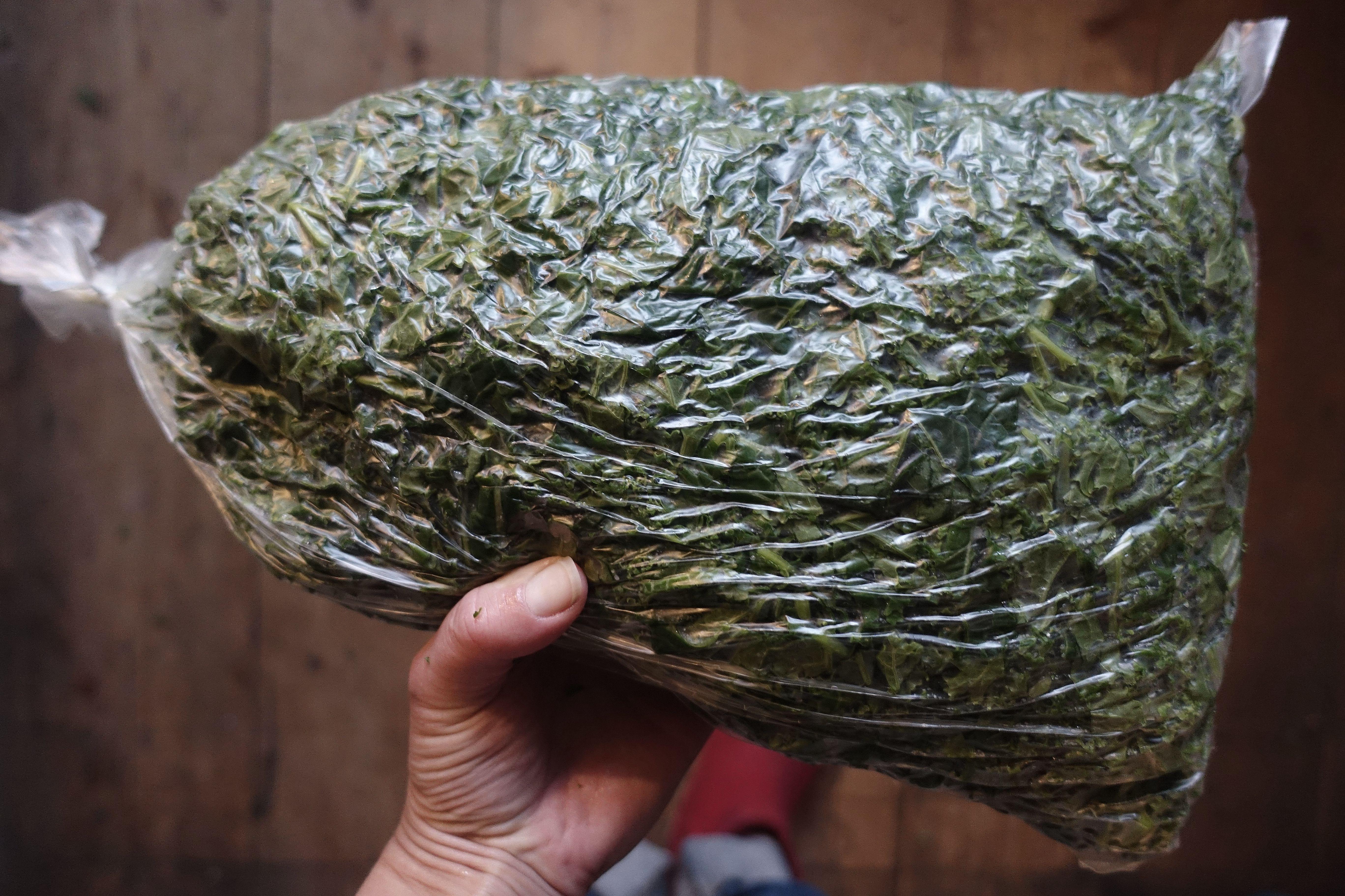frysa in färsk grönkål