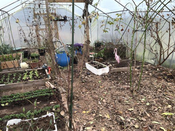 Ett vintrigt tunnelväxthus med mycket lite växtlighet.