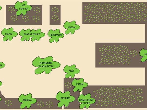 Illustration över fruktträd och buskar tunnelväxthus