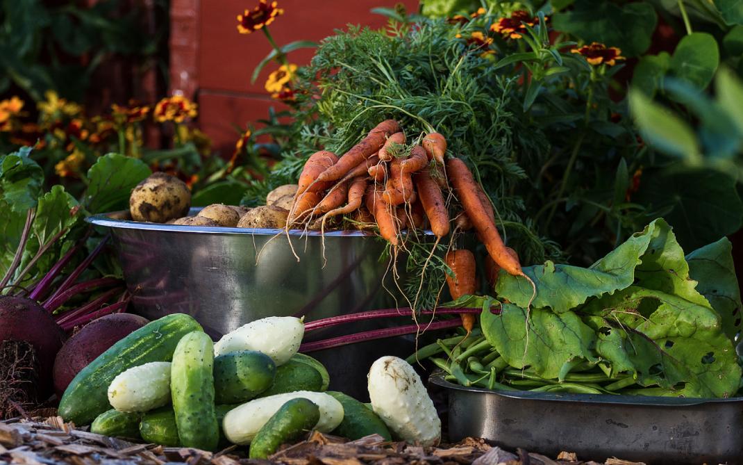 En skördebild med många grönsaker arrangerade tillsammans.