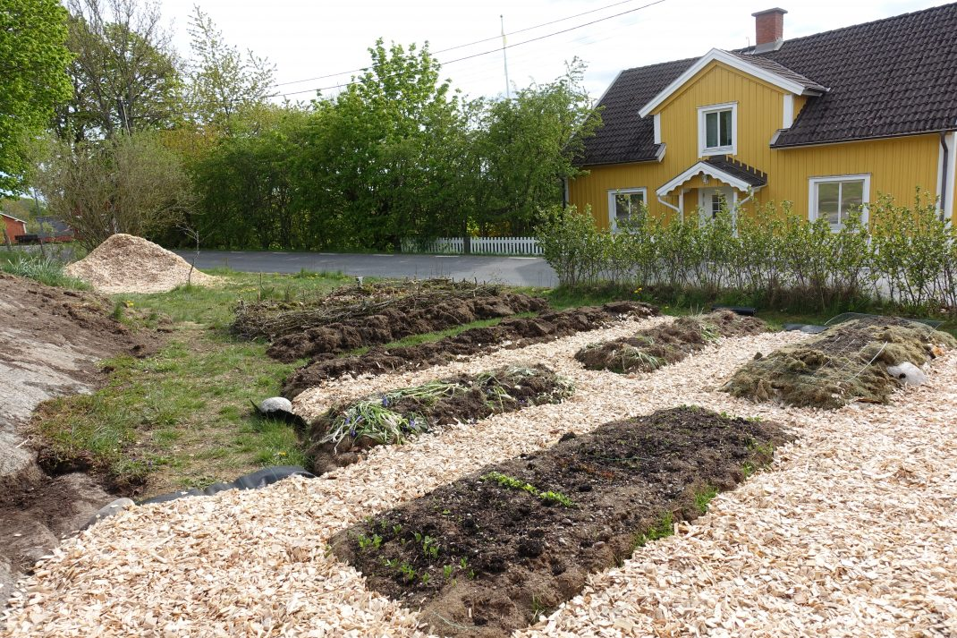En köksträdgård under uppbyggnad, med bäddar och gångar av ljus träflis. New garden paths, a kitchen garden under construction with beds and