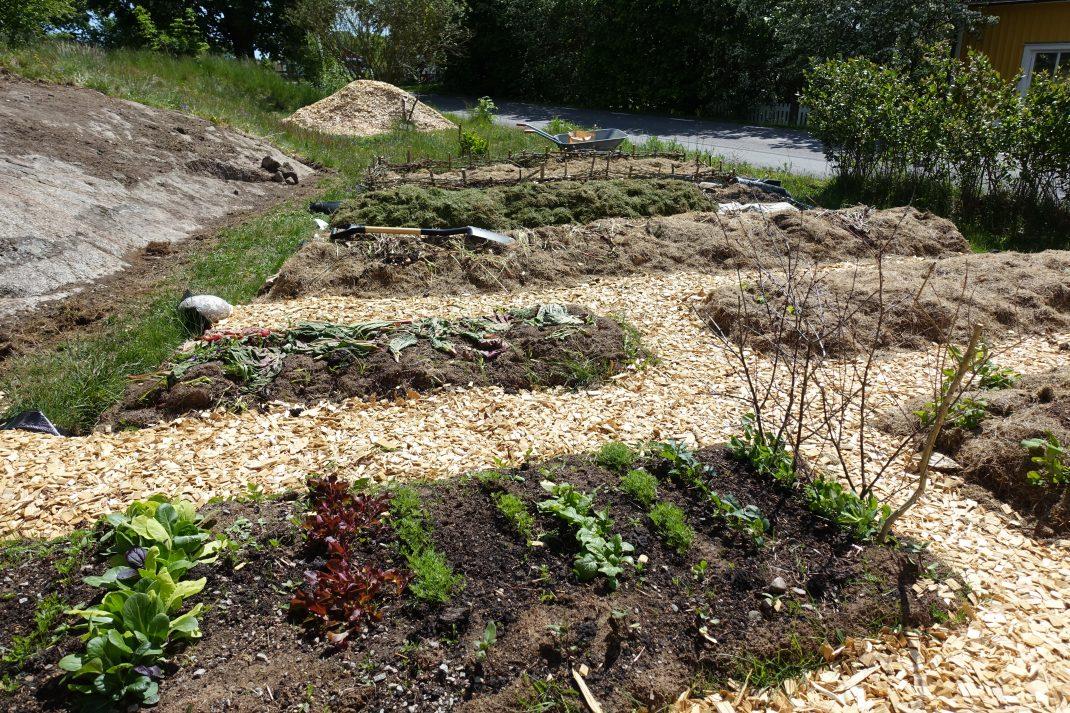 En köksträdgård tar form, med odlingsbäddar och gångar av träflis.