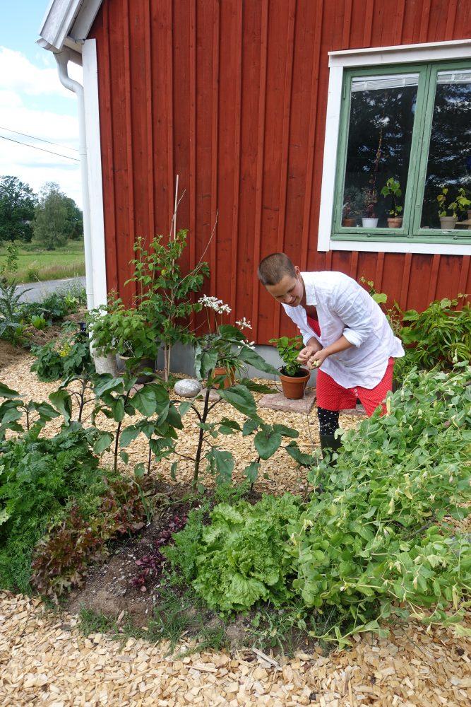 Sara i vit skjorta skördar grönsaker.