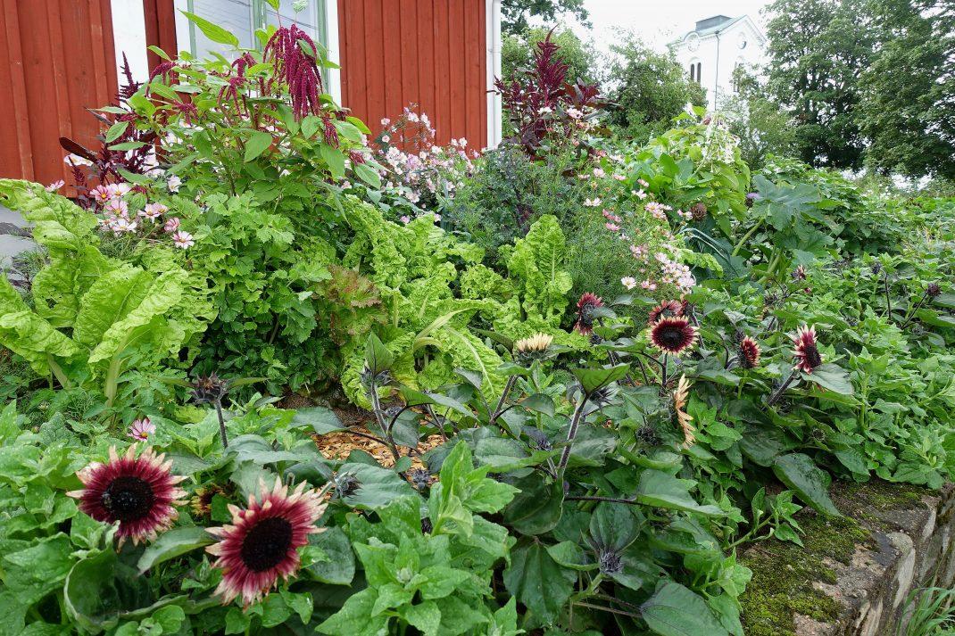 Massor av blommor och grönt mot en röd husfasad med grönt fönster i bakgrunden.