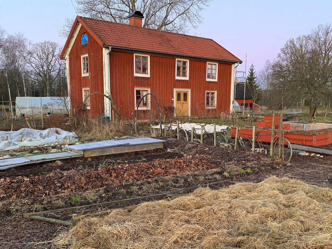 Köksträdgård på vintern utan snö.