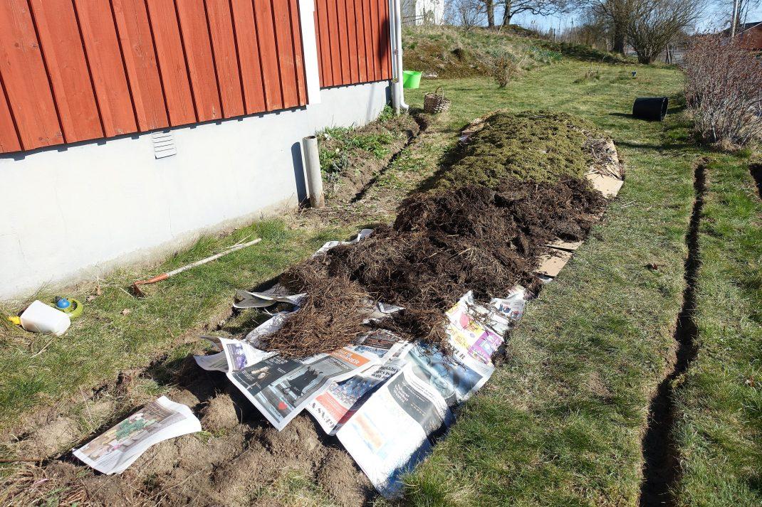 Tidningar och gödsel och gräsklipp har lagts på den nya odlingsbädden.