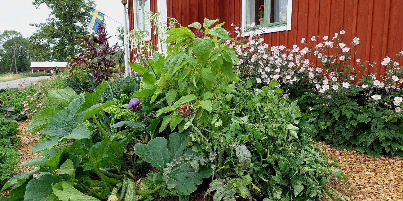 En vacker grönsaksplantering framför en liten röd stuga med gröna fönster.