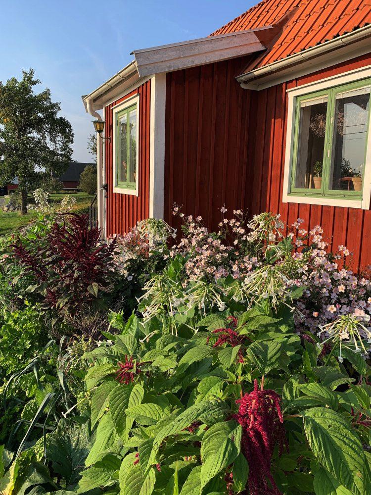 En sommarbild med planterade blommor och grönsaker omvartannat.