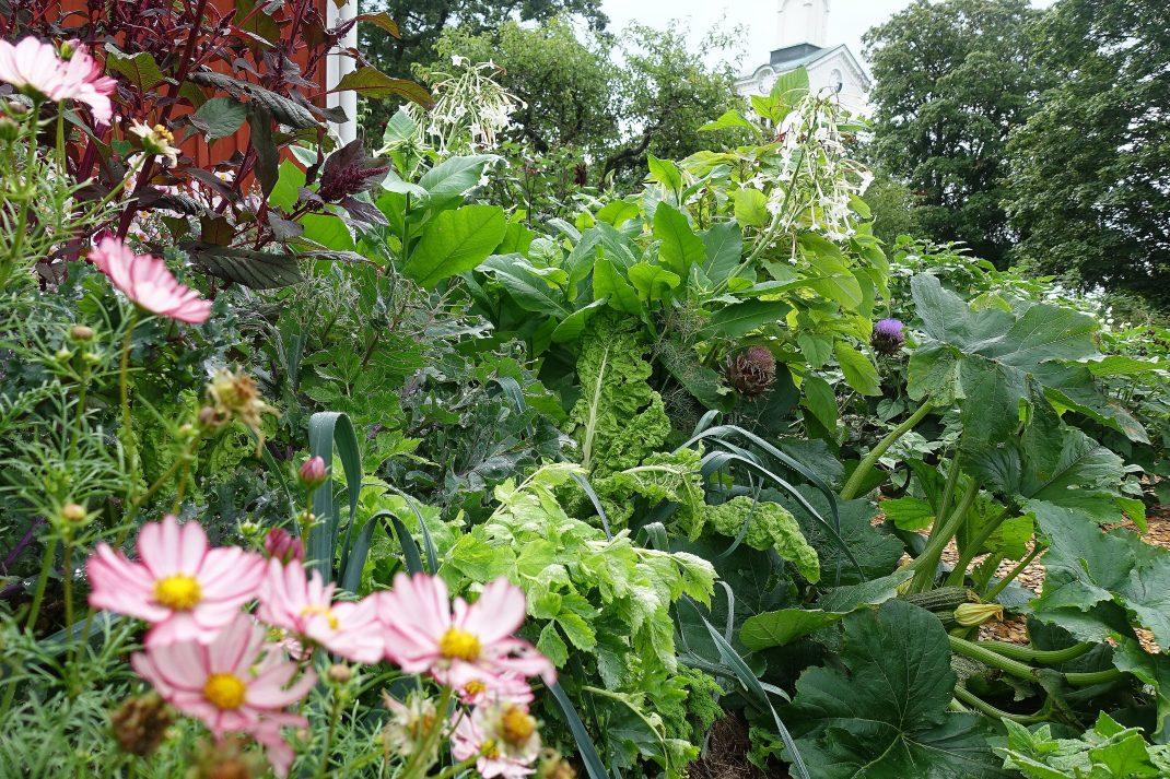 En kraftigt växande plantering av blommor och grönsaker.