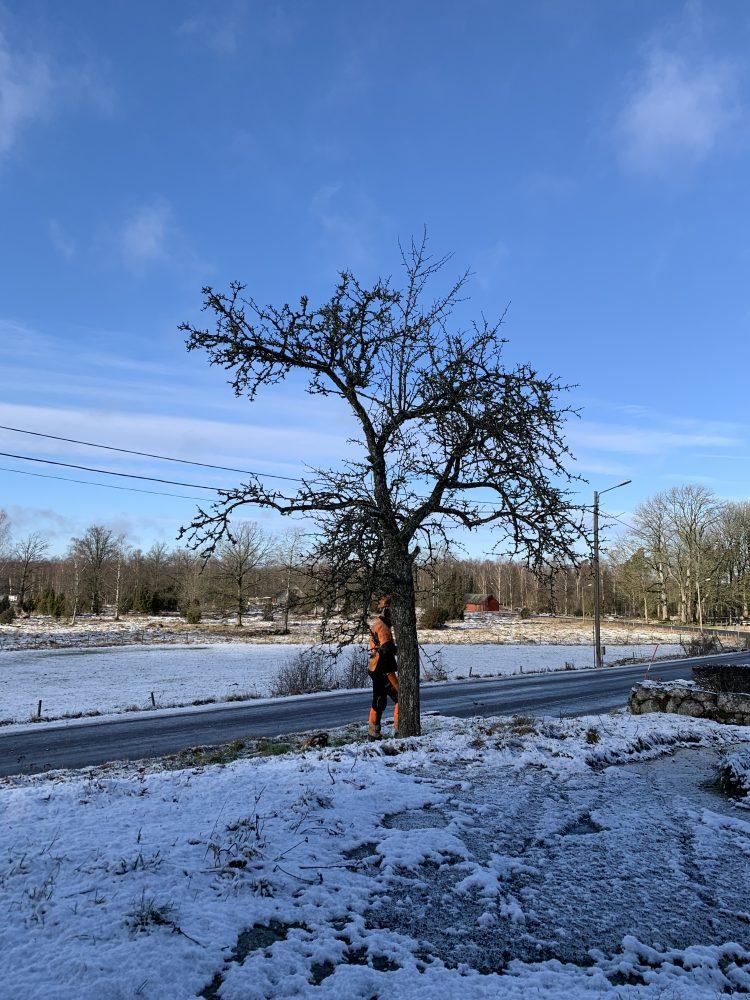 En man i varselkläder står vid ett träd.