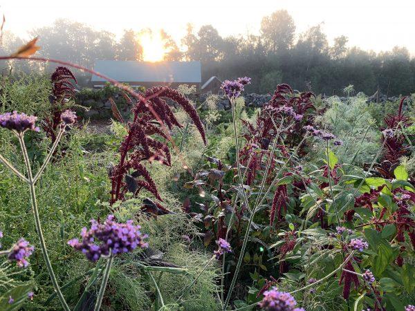 Drömsk trädgårdsbild