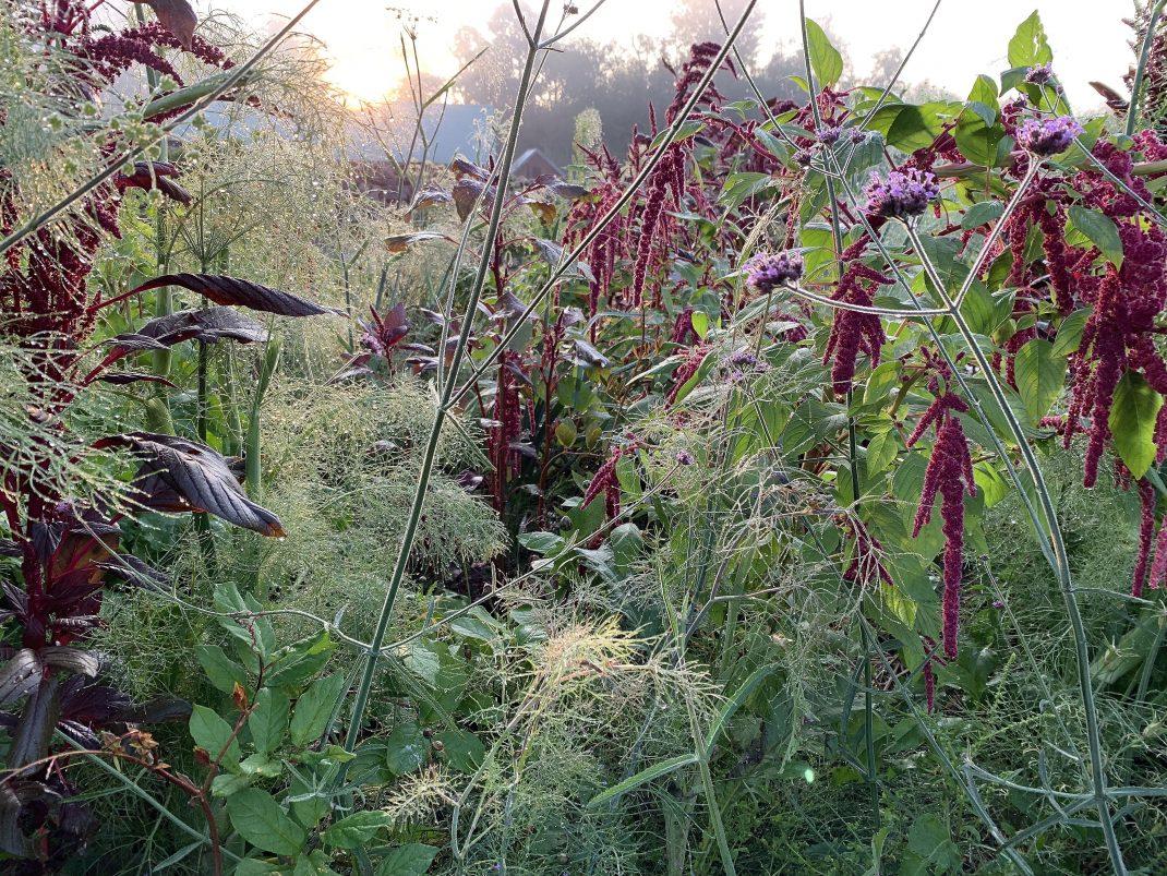 Närbild på samplanteringen med växter i grönt och rött i motljus.