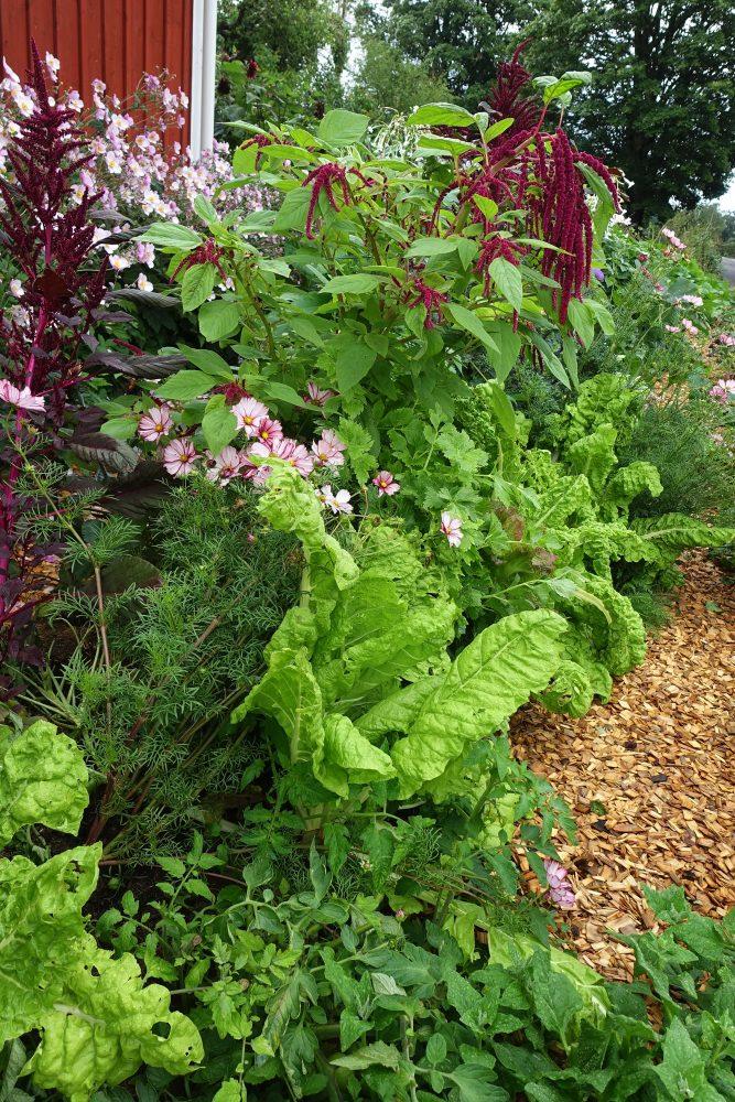 En maffig blandad bädd med grönsaker och blommor.