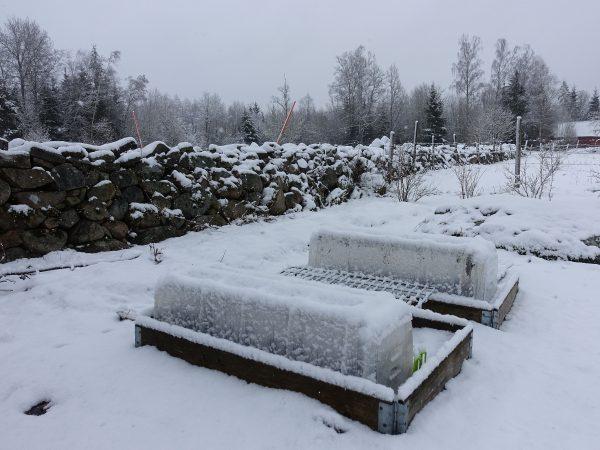 Snöigt landskap och pallkragar med små minitunnlar på.