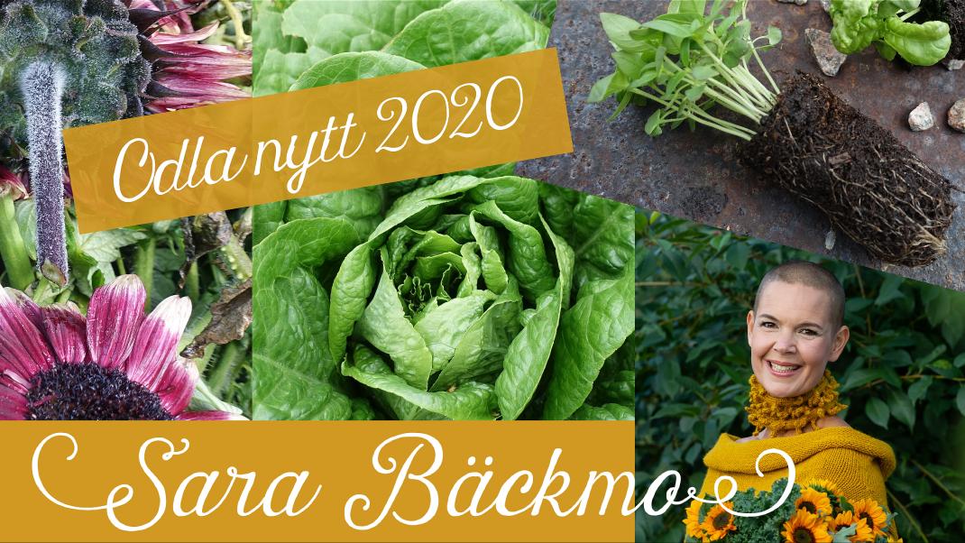 Bildcollage inför föredraget med grönsaker och porträttbild på Sara