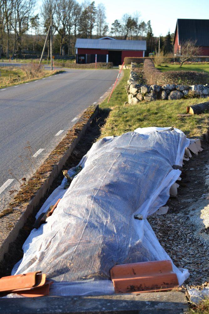 En odlingsbädd vid vägen täckt av vit fiberduk.