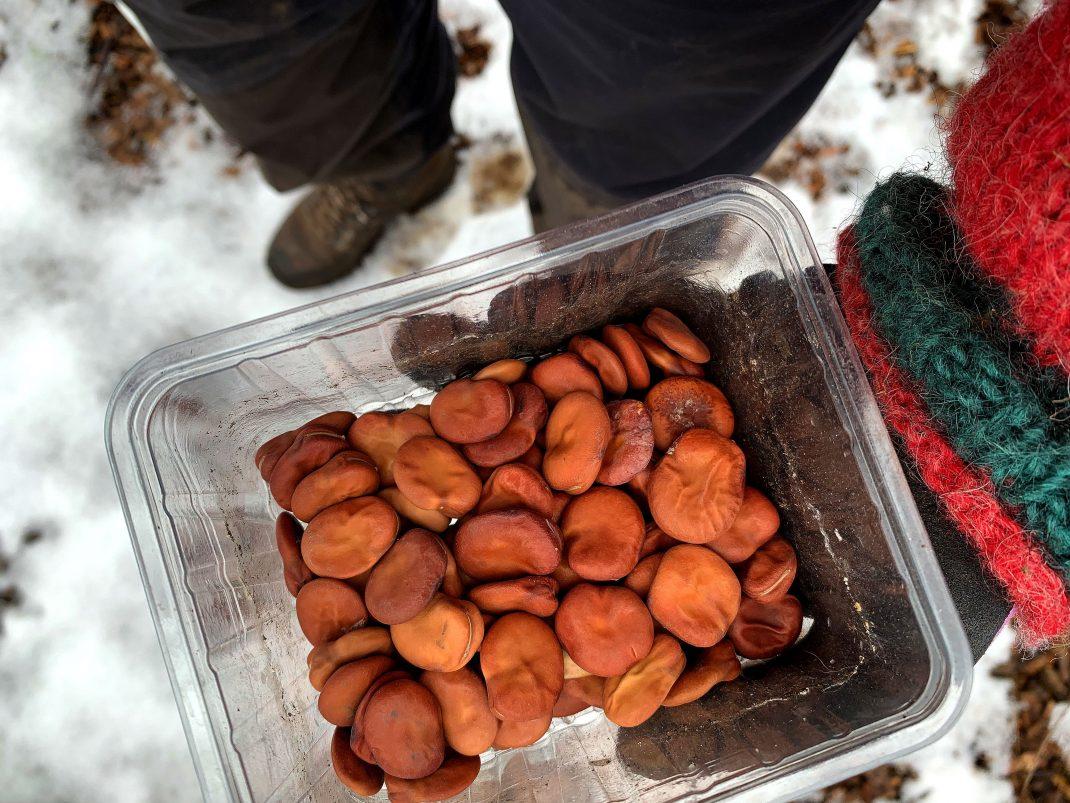 En hand håller en skål med bondbönor över snön.