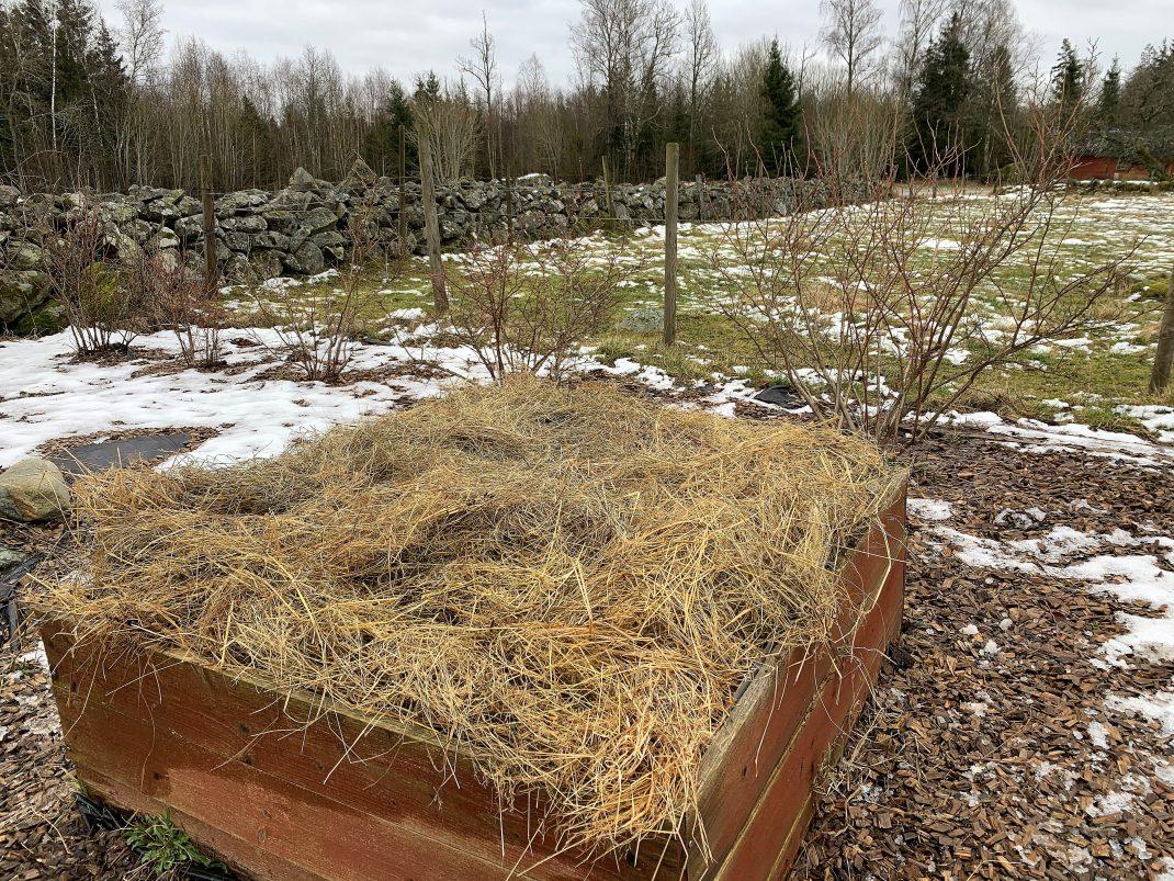En röd odlingslåda med hö på toppen, i ett vintrigtlandskap.