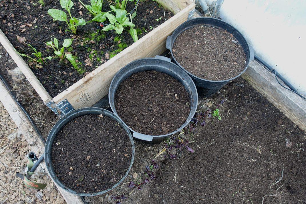 Tre krukor med jord står bredvid varandra vid en pallkrage