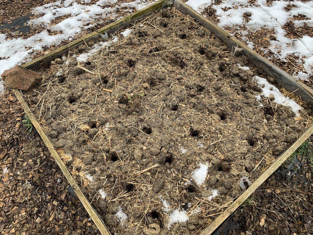 En odlingslåda där någon gjort hål i översta lagret, bredvid varandra.