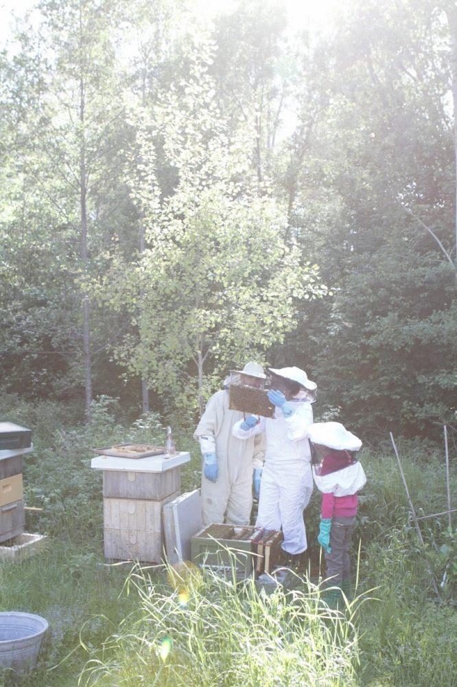 Tre personer i biodlardräkt bredvid bikupor.