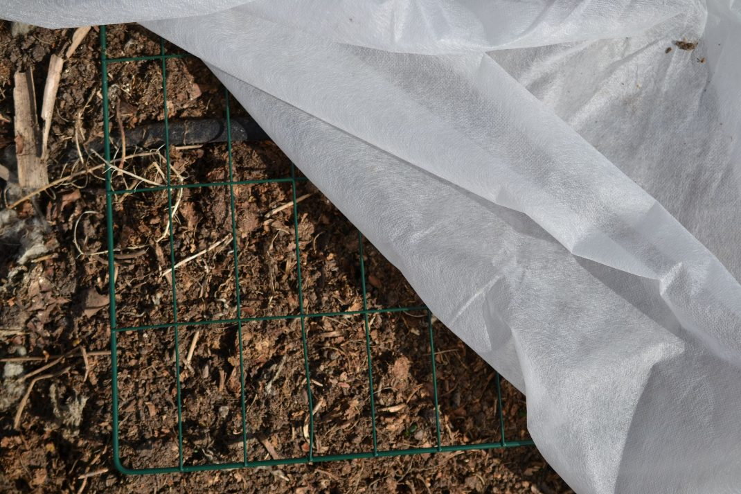 Use row cover, a thin fabric on top of soil and wire mesh.