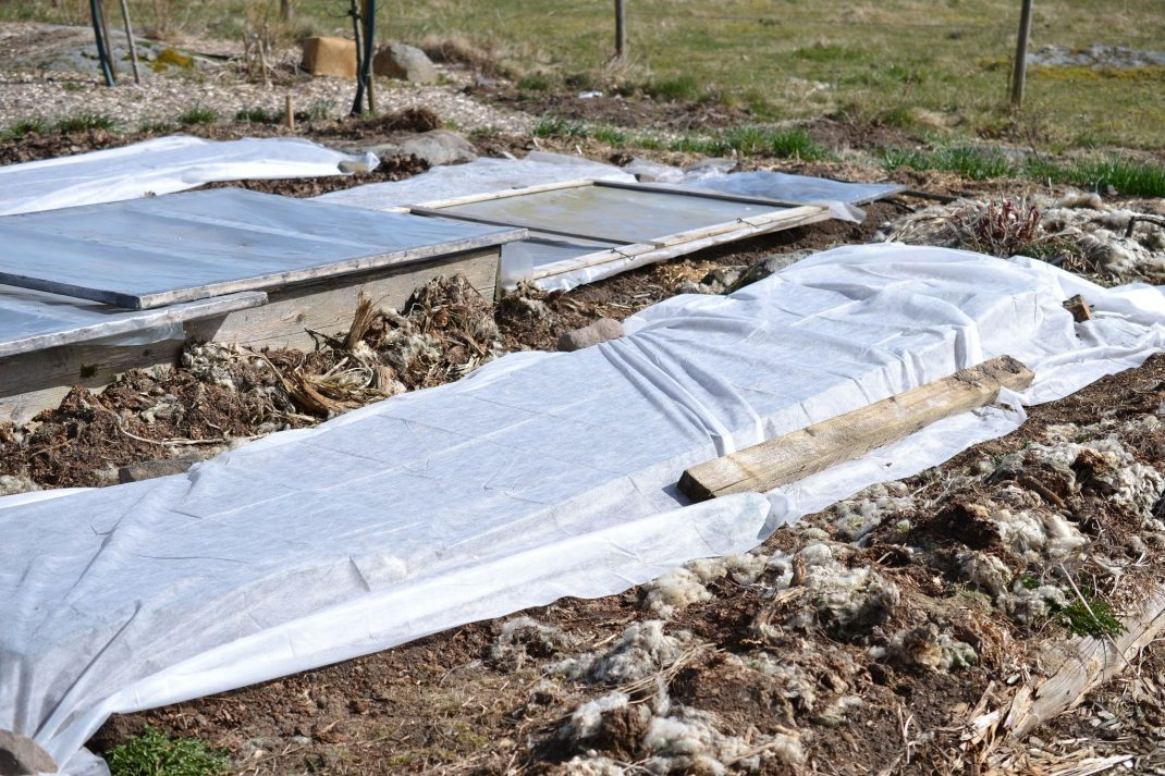 Use row cover, a garden with white fabric on the ground.
