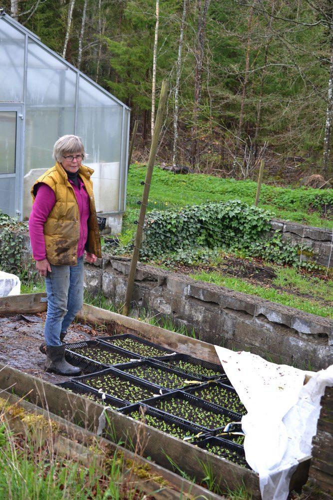 En kvinna står bland sådder i drivbänkar.