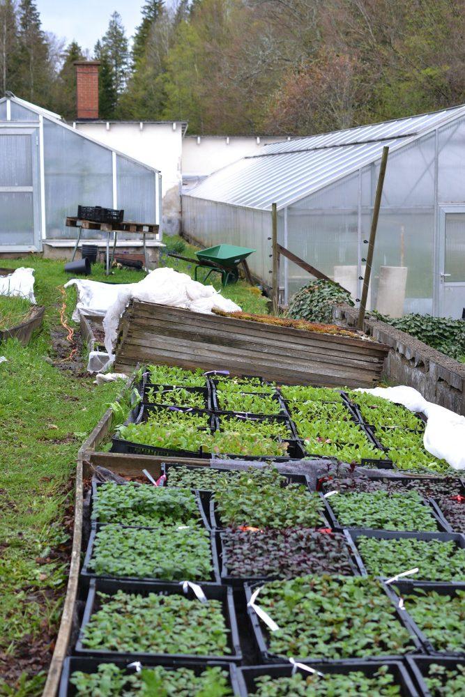 Drivbänkar utomhus framför växthus.