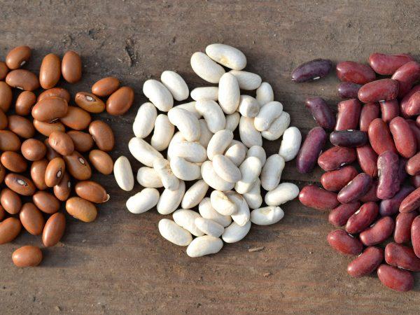 Tre högar med bönor i olika färger.