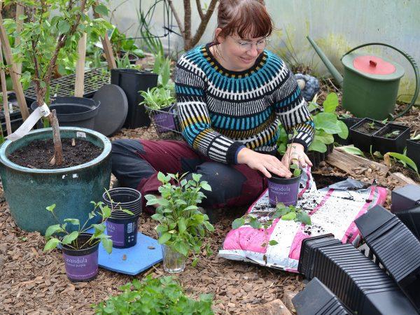 En kvinna i fin stickad tröja sitter i ett växthus och planterar.