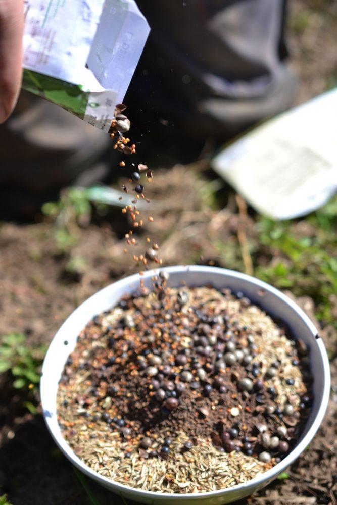 En påse fröer hälls i en skål.