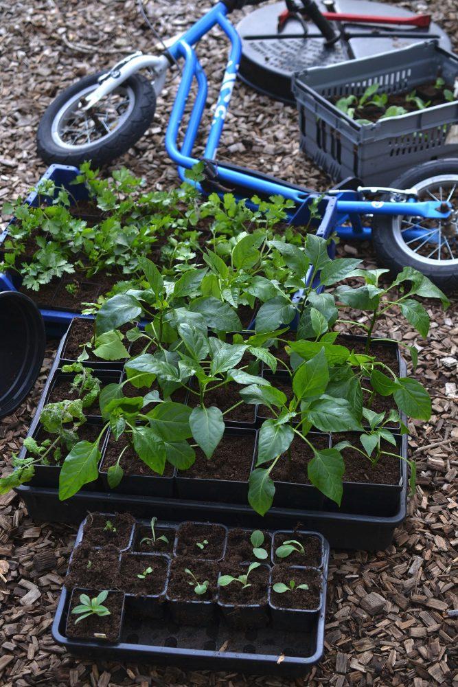 Plantor i backar och en sparkcykel på marken.